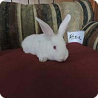 Adopt A Pet :: Rosie - Conshohocken, PA