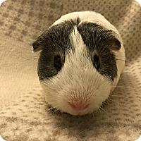 Adopt A Pet :: Alexander Kaplan - Fullerton, CA