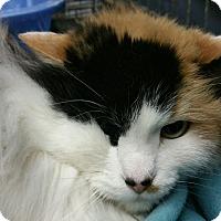 Adopt A Pet :: Missie - Ogden, UT