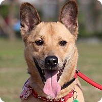 Adopt A Pet :: Ali - San Francisco, CA