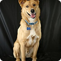 Adopt A Pet :: Bowie - Little Rock, AR