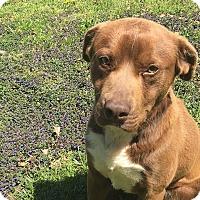 Adopt A Pet :: Happy - Harrisonburg, VA