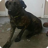 Adopt A Pet :: 4449 - Calhoun, GA