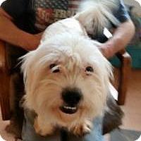 Adopt A Pet :: Ange; - Greensboro, GA
