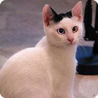 Adopt A Pet :: Mason - San Jose, CA