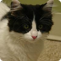 Adopt A Pet :: Firecracker - Hastings, NE