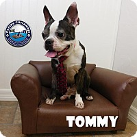Adopt A Pet :: Tommy - Arcadia, FL