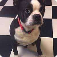 Adopt A Pet :: Smith - Nashville, TN