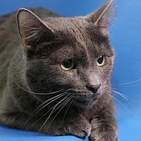Adopt A Pet :: Adonis - Overland Park, KS