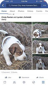 Labrador Retriever Mix Puppy for adoption in Southington, Connecticut - Amity