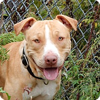 Adopt A Pet :: Dublin - Long Beach, NY