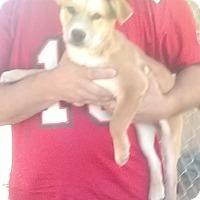 Adopt A Pet :: Lois - Staunton, VA