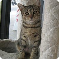 Adopt A Pet :: Flash - Sherman Oaks, CA