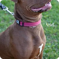 Adopt A Pet :: Ariel - Niagara Falls, NY