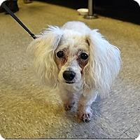 Adopt A Pet :: Dolly - Tavares, FL