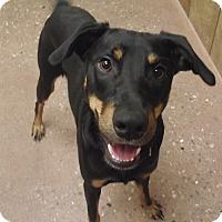 Adopt A Pet :: King - Appleton, WI