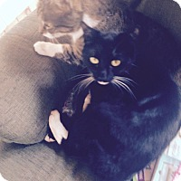 Adopt A Pet :: Angel and Princess (BONDED MOT - Swansea, MA