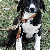 Adopt A Pet :: Libby - Hagerstown, MD