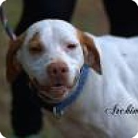 Adopt A Pet :: Archimedes - Middleburg, FL
