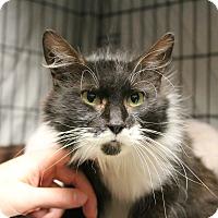 Adopt A Pet :: Freckles - Warwick, RI
