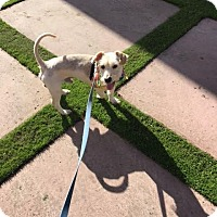 Adopt A Pet :: Neville - San Diego, CA