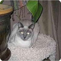 Adopt A Pet :: Sake - Davis, CA