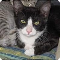 Adopt A Pet :: Rita - Modesto, CA