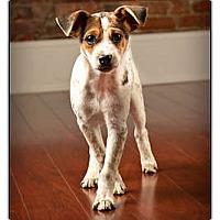 Adopt A Pet :: McGee - Owensboro, KY