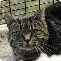 Adopt A Pet :: Angelina - Lunenburg, MA