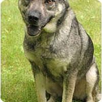 Adopt A Pet :: Scamper - Chicago, IL