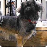 Adopt A Pet :: Betty - Chantilly, VA
