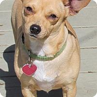 Adopt A Pet :: Tina - Torrance, CA