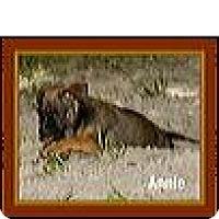 Adopt A Pet :: Annie - Weeki Wachee, FL