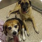 Adopt A Pet :: Zane