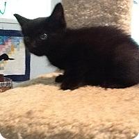 Adopt A Pet :: Sybil - Houston, TX