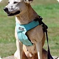 Adopt A Pet :: Angel - Midlothian, VA