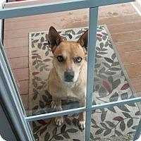 Adopt A Pet :: Calliopy - Nashville, TN