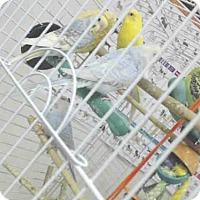 Adopt A Pet :: A058455 - Palmer, AK