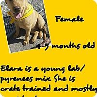 Adopt A Pet :: Elara - Stephenville, TX