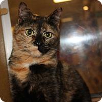 Adopt A Pet :: Chelsea - Arlington/Ft Worth, TX