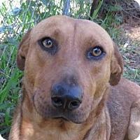 Adopt A Pet :: Sonny!  Loverboy - St Petersburg, FL