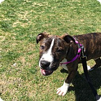 Adopt A Pet :: Cubby - Charlotte, NC