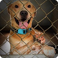 Adopt A Pet :: Ace - Waldron, AR