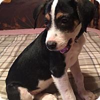Adopt A Pet :: OAKLEIGH BARKLEY - Waldron, AR