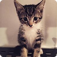 Adopt A Pet :: Slinky - Jersey City, NJ
