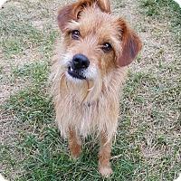 Adopt A Pet :: Mallory - New Oxford, PA