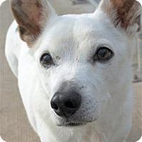 Adopt A Pet :: Ozwald - Waupaca, WI