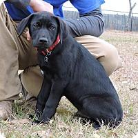 Adopt A Pet :: Sanjay - Berkeley Heights, NJ