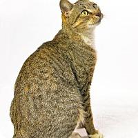 Adopt A Pet :: Clara - Oxford, MS