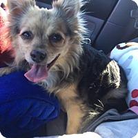 Adopt A Pet :: Mila - Peoria, AZ